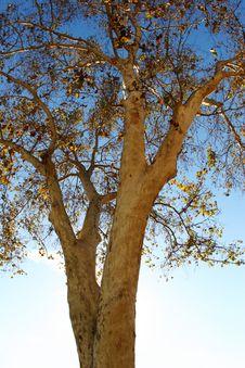 Free Autumn Tree Royalty Free Stock Photos - 393858