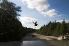 Free Spider Watching Stock Photography - 394162