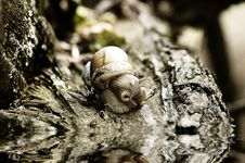 Free Snail Stock Photo - 395260