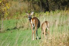 Free Talking Deer Stock Photography - 395612