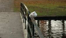 Free Seagul On A Bridge Stock Image - 395761