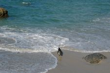 Free Penguin On The Beach. Royalty Free Stock Image - 397506