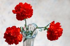 Free Three Carnations Stock Image - 398961