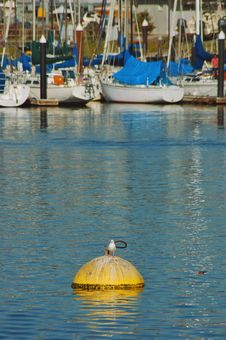 Free Santa Cruz Marina Royalty Free Stock Photos - 399848