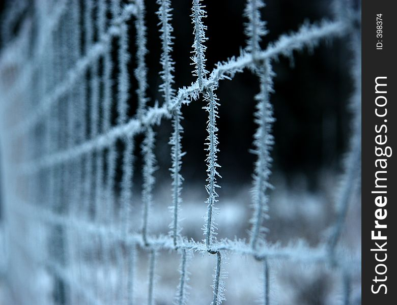 Frozen fence, shallow DOF