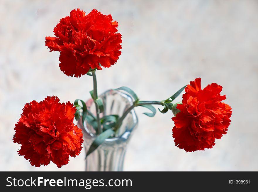 Three carnations