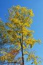 Free Poplar Stock Photography - 3903322