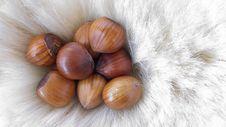 Free Hazelnuts Stock Photo - 3900120