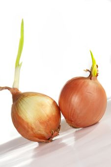 Free Onions Stock Image - 3901611