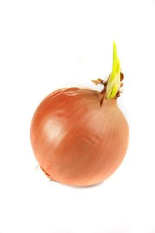 Free Onions Royalty Free Stock Photography - 3901627