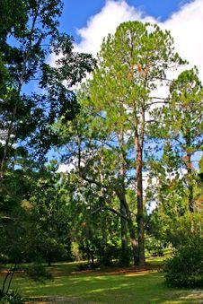 Free Eli Creek, Faser Island, Australia Royalty Free Stock Image - 3901916