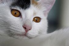 Free Cat Stock Image - 3902311