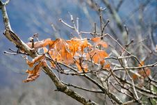 Free Fall Leaves And Blue Sky Royalty Free Stock Photos - 3902728
