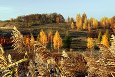 Free Autumn Perspective Stock Photos - 3904203