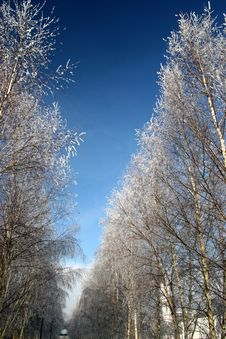 Free Winter Landscape Royalty Free Stock Images - 3905519