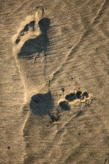 Free Footprint In The Sand Stock Photos - 3906143