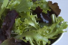Mixed Greens Salad Stock Image