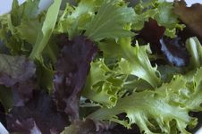 Mixed Greens Salad Stock Photography