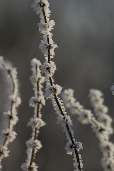 Free Frozen Branches Stock Photography - 3908282