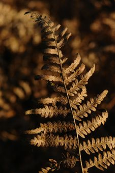 Free Autumn Fern Royalty Free Stock Photos - 3908538