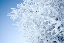 Free Frosted Tree Stock Photo - 3909210