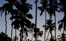 Dark Palm Stock Photos