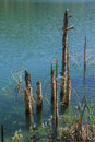 Free Reflection Of Branches On Lake Waters Royalty Free Stock Photo - 39028995