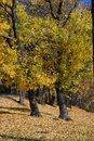 Free Autumn Splendor Stock Image - 3911621