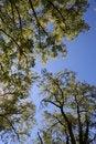 Free Park Trees Royalty Free Stock Photo - 3911945