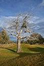 Free Lone Dead Tree Stock Photos - 3916333