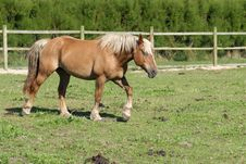 Free Horse In Paddock Stock Photo - 3910200
