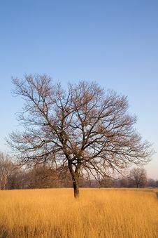 Free Lonely Tree Stock Photos - 3910933
