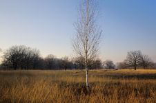 Free Lonely Tree Stock Photography - 3910972