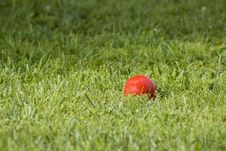 Free Red Croquet Ball Stock Image - 3911111
