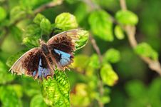 Free Butterfly Close Up Royalty Free Stock Photos - 3911638