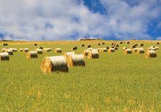 Free Hay Stock Image - 3912301