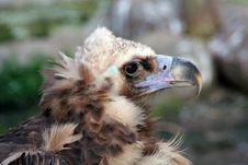 Free Bird Of Prey Stock Photos - 3913543