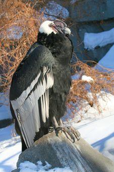 Free Bird Of Prey Royalty Free Stock Photo - 3913545