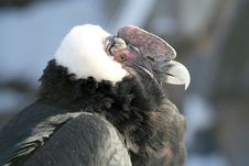Free Bird Of Prey Stock Photo - 3913550
