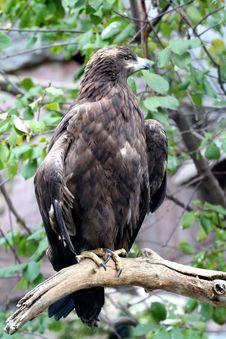 Free Bird Of Prey Stock Images - 3913574