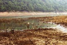 Free Golden Lake Morning, China Royalty Free Stock Images - 3913789