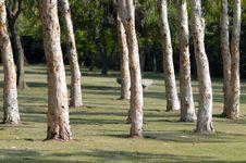 Free Tree Terrace Royalty Free Stock Image - 3914116