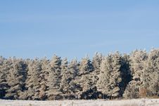 Free Winter Landscape Royalty Free Stock Image - 3914786