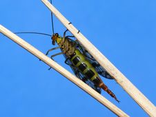 Free Scorpion Fly Royalty Free Stock Photography - 3915457