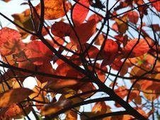 Free Autumn Colours Stock Image - 3919041