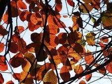 Free Autumn Colours Royalty Free Stock Photo - 3919065