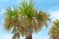 Free Top Of A Palmtree Royalty Free Stock Images - 3924439