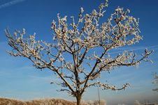 Free Iced Tree And Blue Sky Stock Photography - 3920972