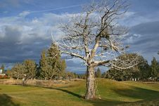 Free Lone Tree Royalty Free Stock Image - 3920996