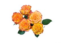 Free Bouquet Of Roses.close Up Stock Photography - 3922682